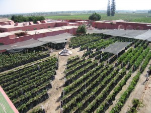 Ica, Peru's Tacama Winery