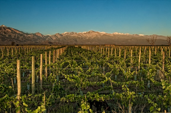 Vineyards Against the Andes 3